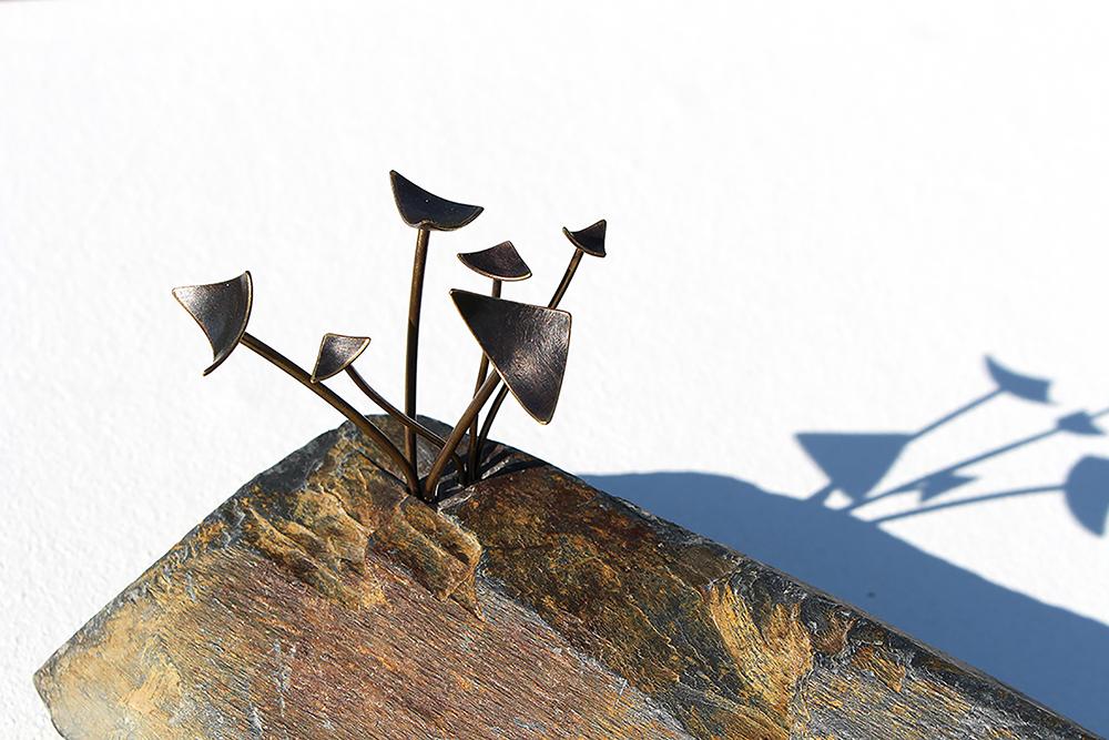 11.-Copper-Beech-Seedling-